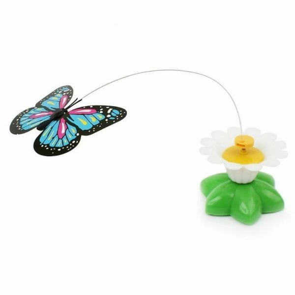 14 29 butterfly 5 361386 as shown 5b6deded ca90 40e1 a531 99a7c3623f0d.jpg