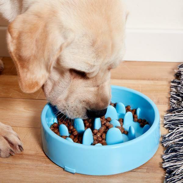 anti choke pet food bowl 0.jpg